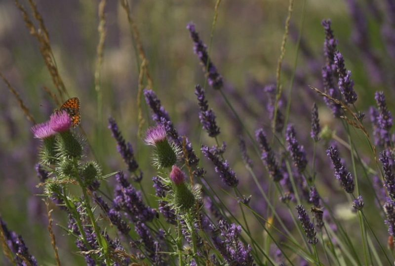 Parc Naturel Régional des Baronnies provençales à Sahune - 1