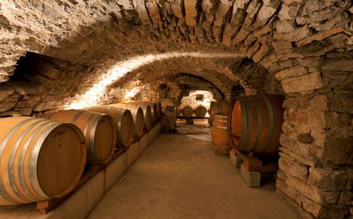 Sous l'olivier, la vigne à Condorcet - 4