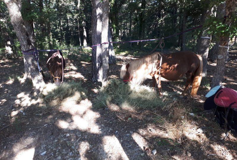 Location de poneys, lamas et ânes Raspail à Vers-sur-Méouge - 1