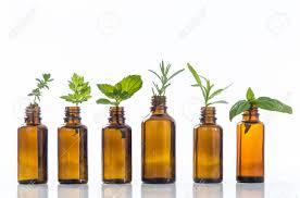 Les rencontres olfactives (Baladez Curieux)