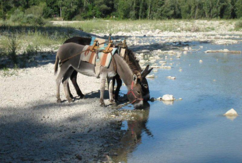 Randonnées avec les ânes à Éourres - 1