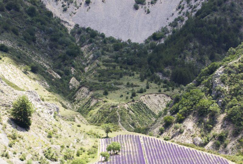 Un petit air de Provence…au Pays des Baronnies (n°12) à Buis-les-Baronnies - 0